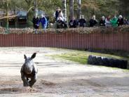 Serie: Augsburg in 360 Grad: Der Zoo