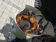 Augsburg: Eichhörnchen sonnt sich - Feuerwehr rückt an