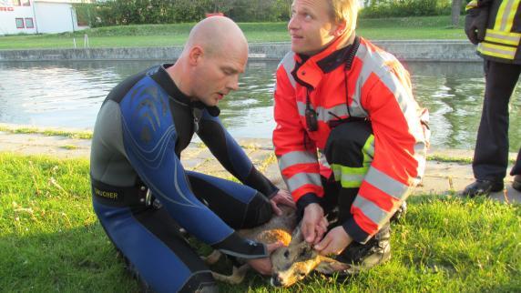 Augsburg: Feuerwehr-Taucher retten Rehbock aus Kanal
