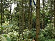 Kreis Starnberg: Fallschrimspringer bleibt in Baum hängen