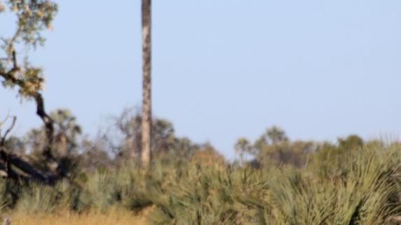 Fernreisen: Auf dem Hippo-Highway