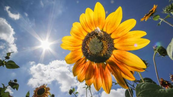 Wetter: Der Herbstanfang wird sommerlich - bis zu 28 Grad sind drin