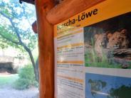 Sachsen: Zoo Leipzig: Löwen überwanden Wassergraben