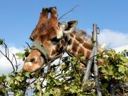 Augsburg: Ordnungsreferent will Zirkusse mit Wildtieren in Augsburg verbieten