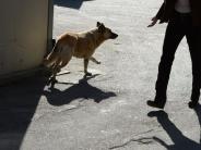 Ratgeber: Straßenhunde aus dem Ausland: Sorgenkind oder Bereicherung?