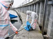 Vogelgrippe H5N8: So rasant verbreitet sich die Vogelgrippe auf der Welt