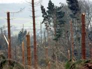 """Orkan: Zehn Jahre nach """"Kyrill"""": Viele Waldbauern haben ihre Lektion gelernt"""
