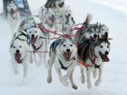 Bad Hindelang: 500 Schlittenhunde bei WM-Qualifikation im Allgäu