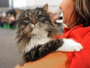 Kreis Dachau: Katze drückt Notruf-Knopf, um sich aus Auto zu befreien