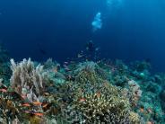 Indonesien: Noch Paradies, bald Ruine? Tauchurlaub auf Selajar