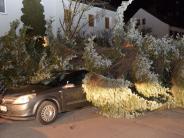 Augsburg: Starker Wind: Baum stürzt auf Auto