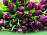 Ratgeber: Mit diesen Tipps bleiben Tulpen länger frisch