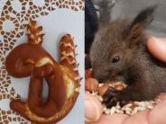 Haunstetten: Nach dem Räuber kam ein Eichhörnchen in die Bäckerei