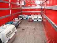 Augsburg: 16 Katzen aus Wohnung befreit