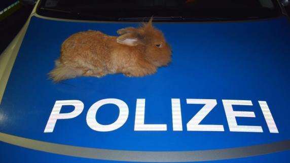 Wem gehört das Tier? | Ausgebüxtes Kaninchen wärmt sich auf Polizeiwagen