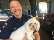 Kalifornien: Feuerwehrmann rettet Mischling mit Mund-zu-Hund-Beatmung