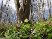 Frühling: Wann wird es draußen endlich richtig grün?
