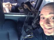 USA: Polizist kümmert sich um entlaufene Ziegen