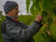 Frühling 2017: Eiskalt erwischt: Was der Wintereinbruch für Obstbauern bedeutet