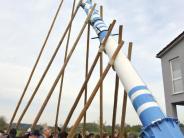 Freienried: Maibaumaufstellen mit langen Stangen