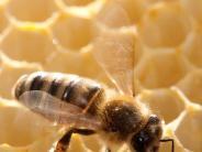 Wissenschaft: Was ist dran am Massensterben? Die Sache mit den Bienen