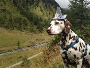 Bildergalerie: Tag des Hundes: Die Lieblinge unserer Leser
