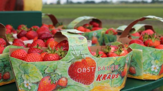 Ihr Fachmann vor Ort: Beliebte Beeren