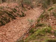 """Rätselhafte Orte: Was es mit der """"Wilden Jagd"""" im Höllgraben auf sich hat"""