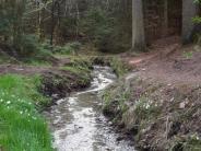 Rätselhafte Orte: Was glitzert denn da im Wald zwischen Aichach und Hollenbach?