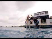 Wettschwimmen: Zuschauer enttäuscht: Michael Phelps schwimmt nicht gegen realen Hai