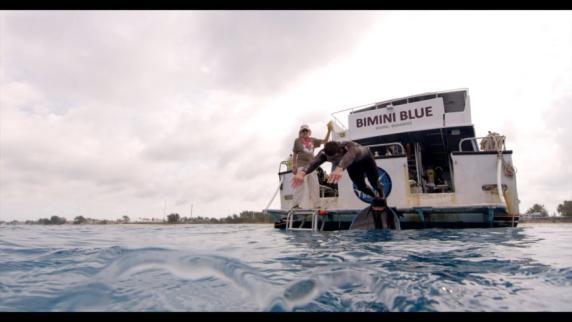 Angebliches Wettschwimmen mit Hai verärgert TV-Zuschauer