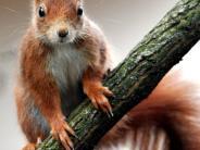 Leichte Sprache: Eichhörnchen turnt durch ein Fitness-Studio