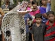 Gesundheit: Giftschlangen-Alarm: Weltweiter Engpass bei Gegengift