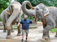 """Zoo Augsburg: """"Wie betreutes Wohnen"""": Die alten Elefanten und ihr Pfleger"""
