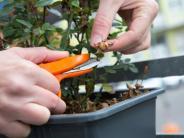 Garten: Worauf Hobbygärtner im Herbst achten müssen