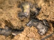 Interview: Archäologe: Bayern ist immer gut für spektakuläre Entdeckungen