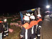 Kreis Dillingen: Viehtransporter kippt um – 30 Schweine sind tot