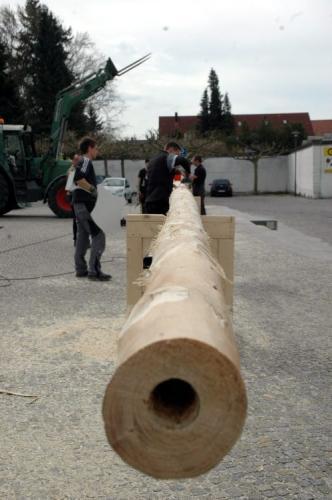 20 Helfer richten 30-Meter-Fichte auf. Der Baum bleibt bis 2016 stehen