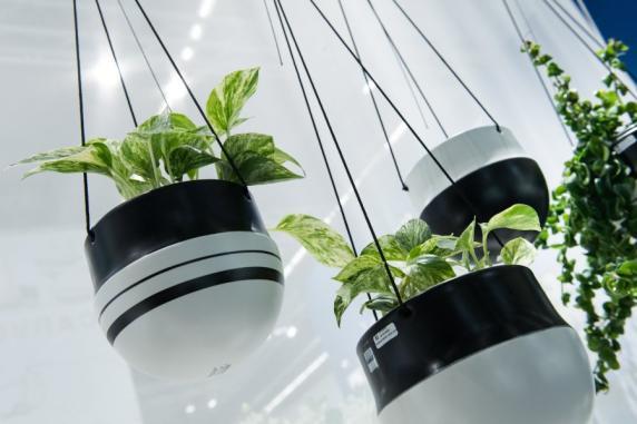 tipps wie zimmerpflanzen die wohnung in eine gr ne oase verwandeln geld leben augsburger. Black Bedroom Furniture Sets. Home Design Ideas