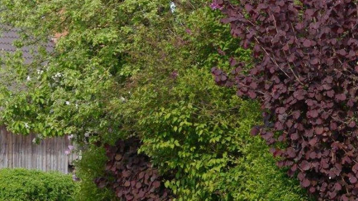 Garten Sichtschutz und Lebensraum Nachrichten Krumbach