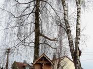 Gemeinderat Balzhausen: Auch die letzten Birken müssen fallen