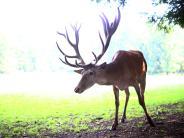 Krumbach: Wild gewordene Tiere kommen Autos in die Quere