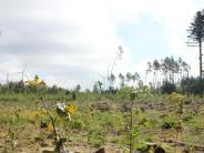 Landkreis Günzburg: So sieht die Zukunft des Scheppacher (Autobahn-) Forsts aus