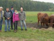 Deisenhausen: Nach dem Kiesbagger kommen die Kühe