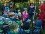 Waltenhausen: Wo die Weihnachtsbäume wachsen