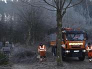 Thannhausen: Zahlreiche Bäume müssen weichen
