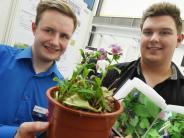 Jugend forscht: Großer Erfolg für Krumbacher Gymnasium