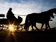 Neu-Ulm/Roggenburg: Wenn ein frei laufender Hunddie Pferde scheu macht