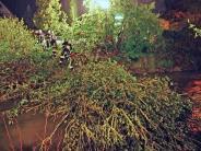 Thannhausen: Wintereinbruch: Bäume fallen in die Mindel