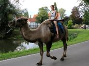 Krumbach: Auf dem Kamel durch den Stadtpark